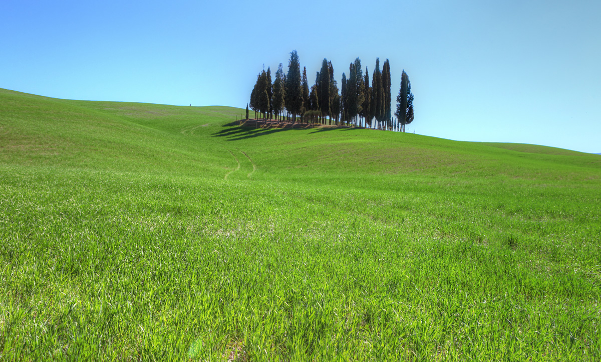 Cypress Trees outside of San Quirico d'Orcia